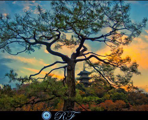 Ray Focal Tree